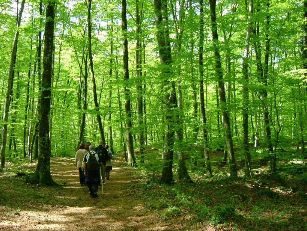 מרכז גארוצ'ה פארק הטבע של האזור הוולקני